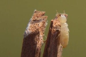 Effective Termite Treatment