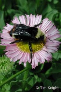 Stingers - Bees