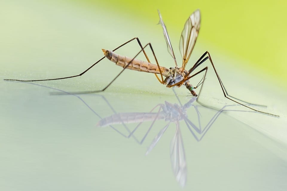 Repelling Mosquitoes In Your Yard Abc