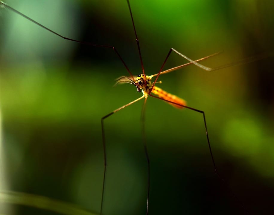 Types of Mosquitoes in Omaha, NE