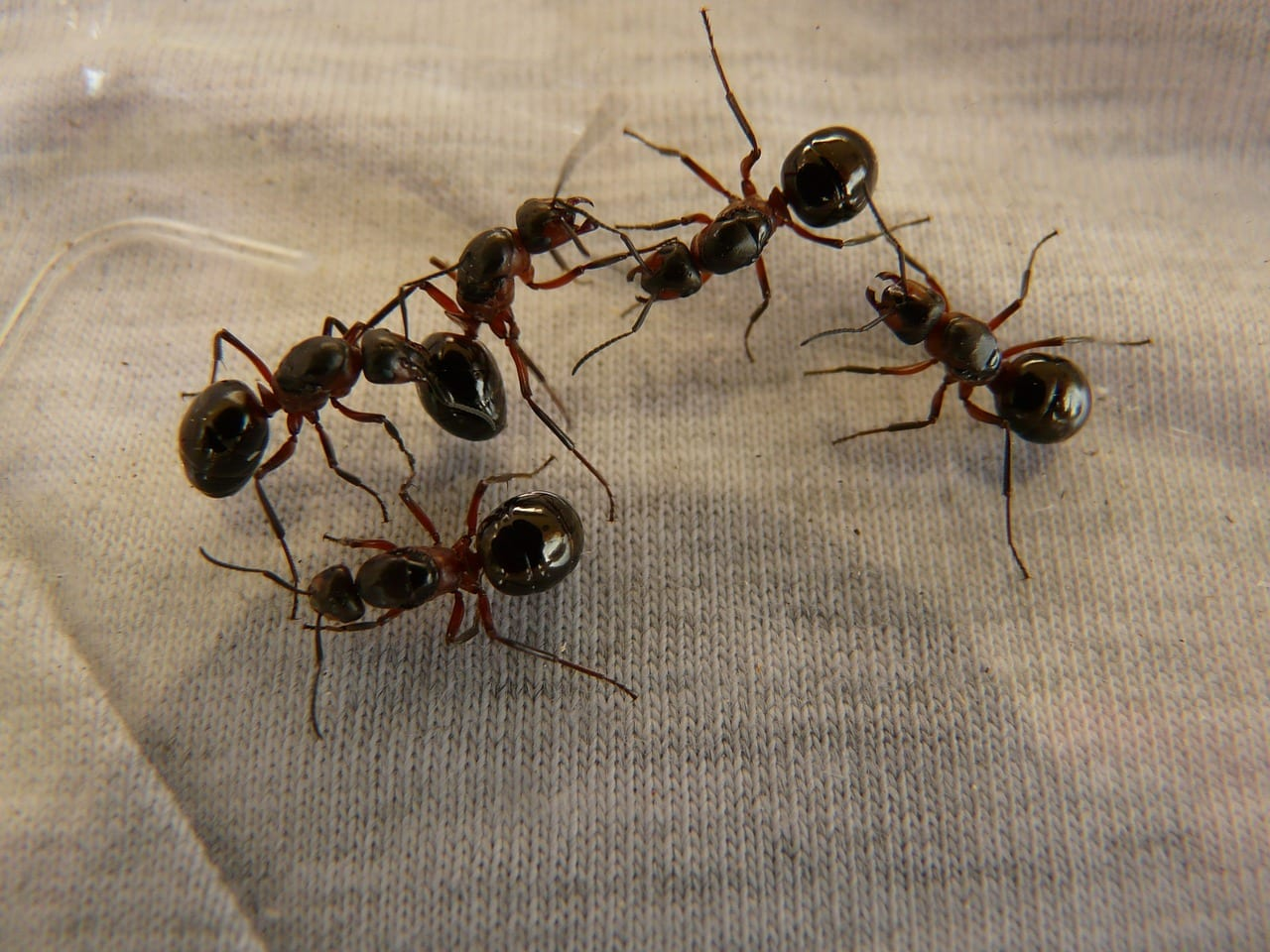 ants pest control Omaha and Lincoln NE