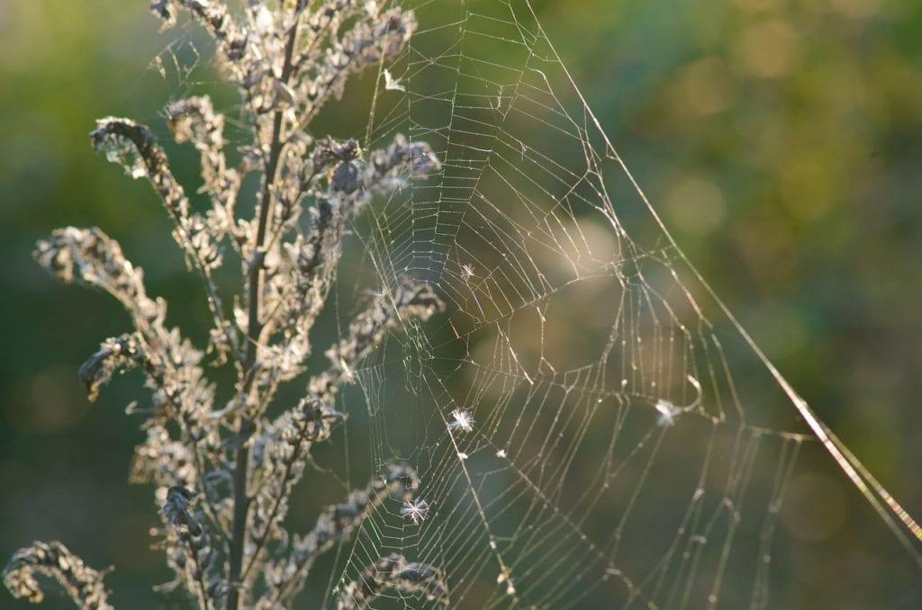 spider pest control Omaha & Lincoln exterminators