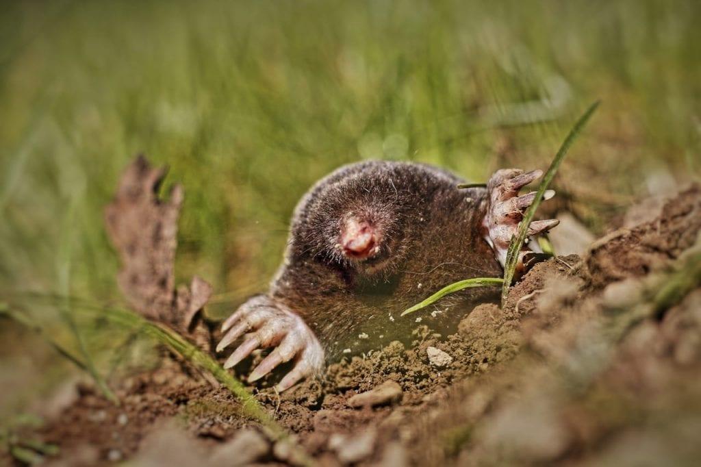 moles & voles pest control Omaha & Lincoln NE