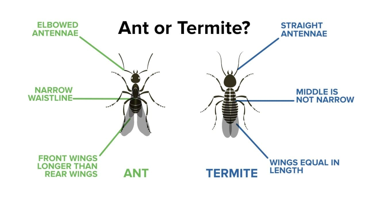 How To Treat Termites In Wood Floor Best Ways