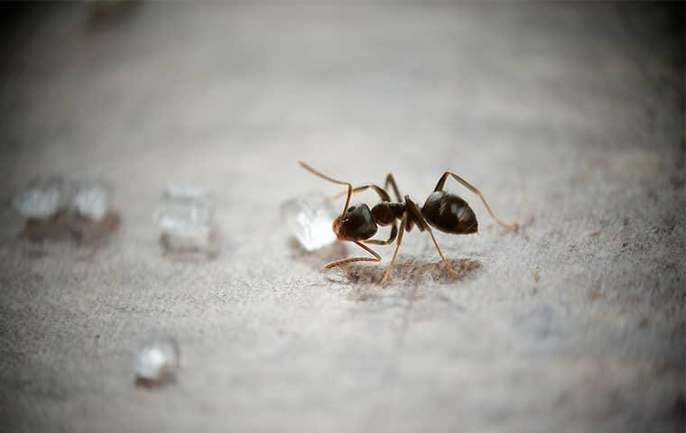 How to Ant-Proof Your Home