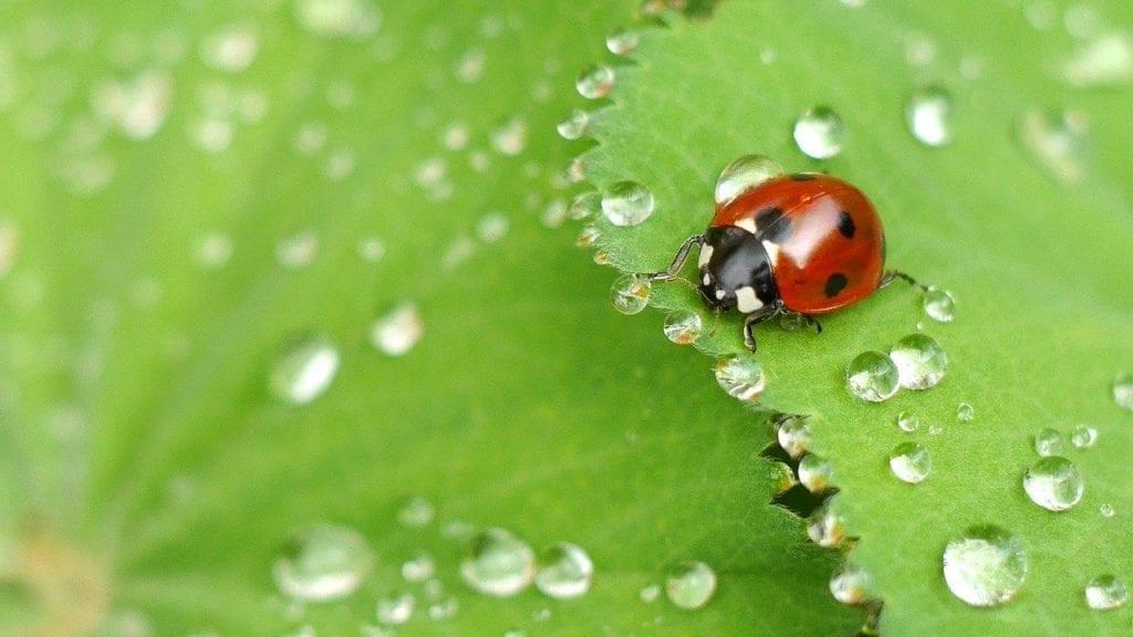 green or organic pest control