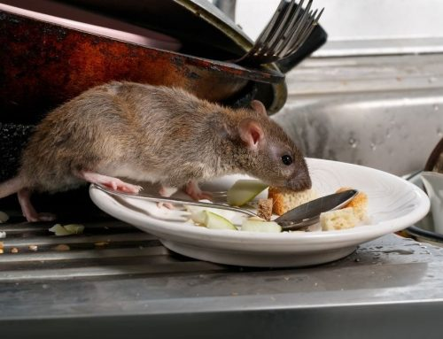 Signs of Rodents in Your Restaurant