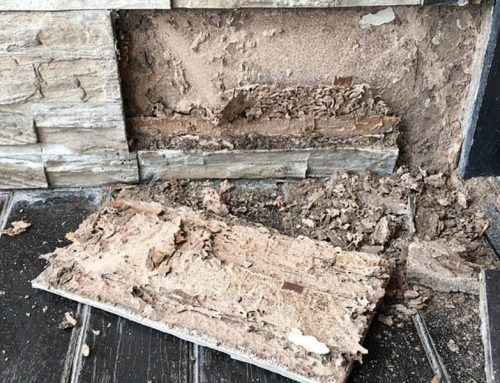 Does Winter Reduce Termite Activity?