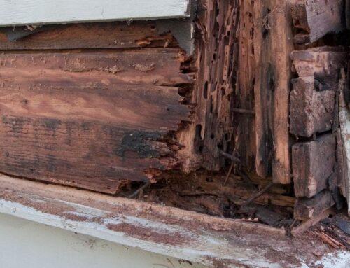 Termite Damage vs. Wood Rot
